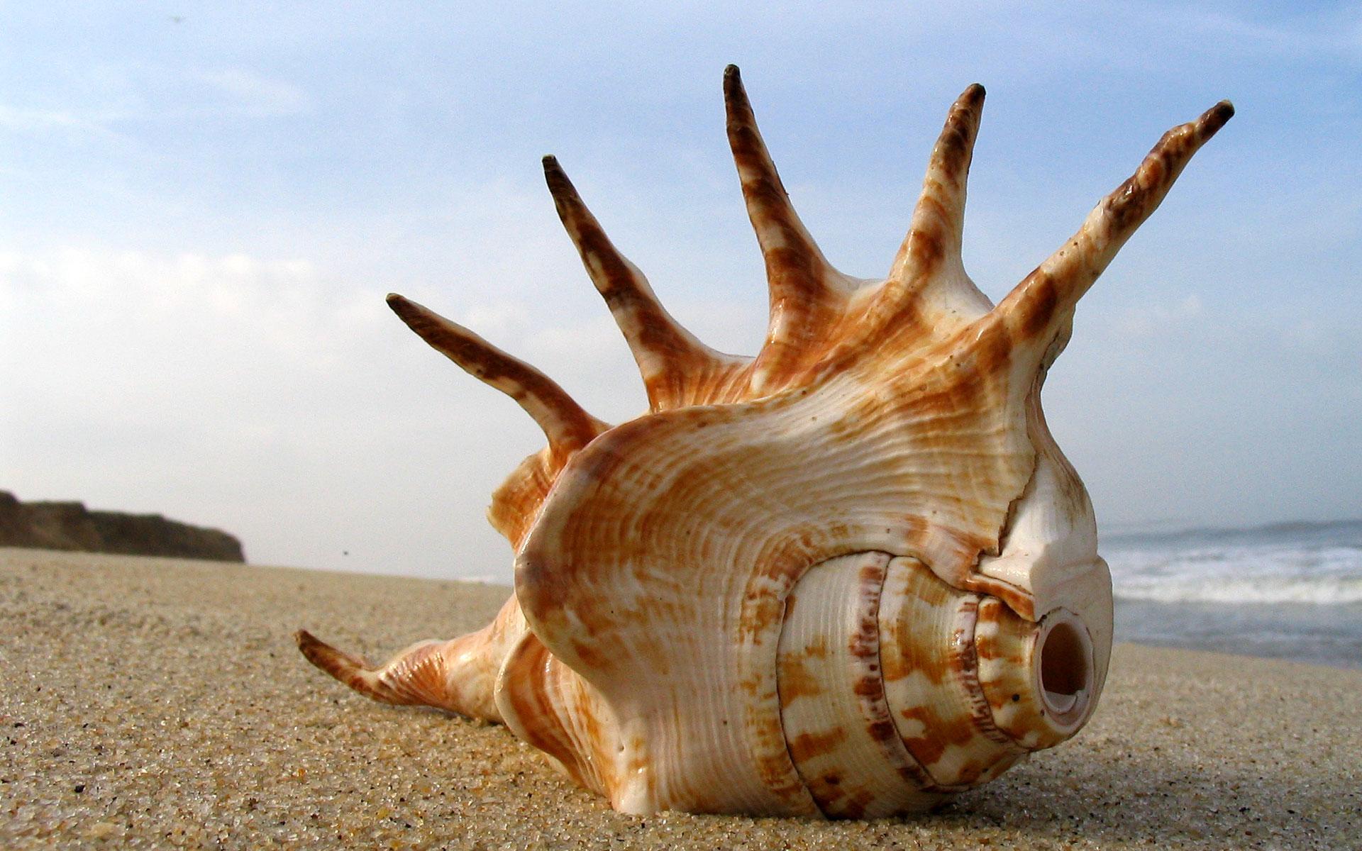 Stáhnout příroda tapety, 'z-moře-darovaná'