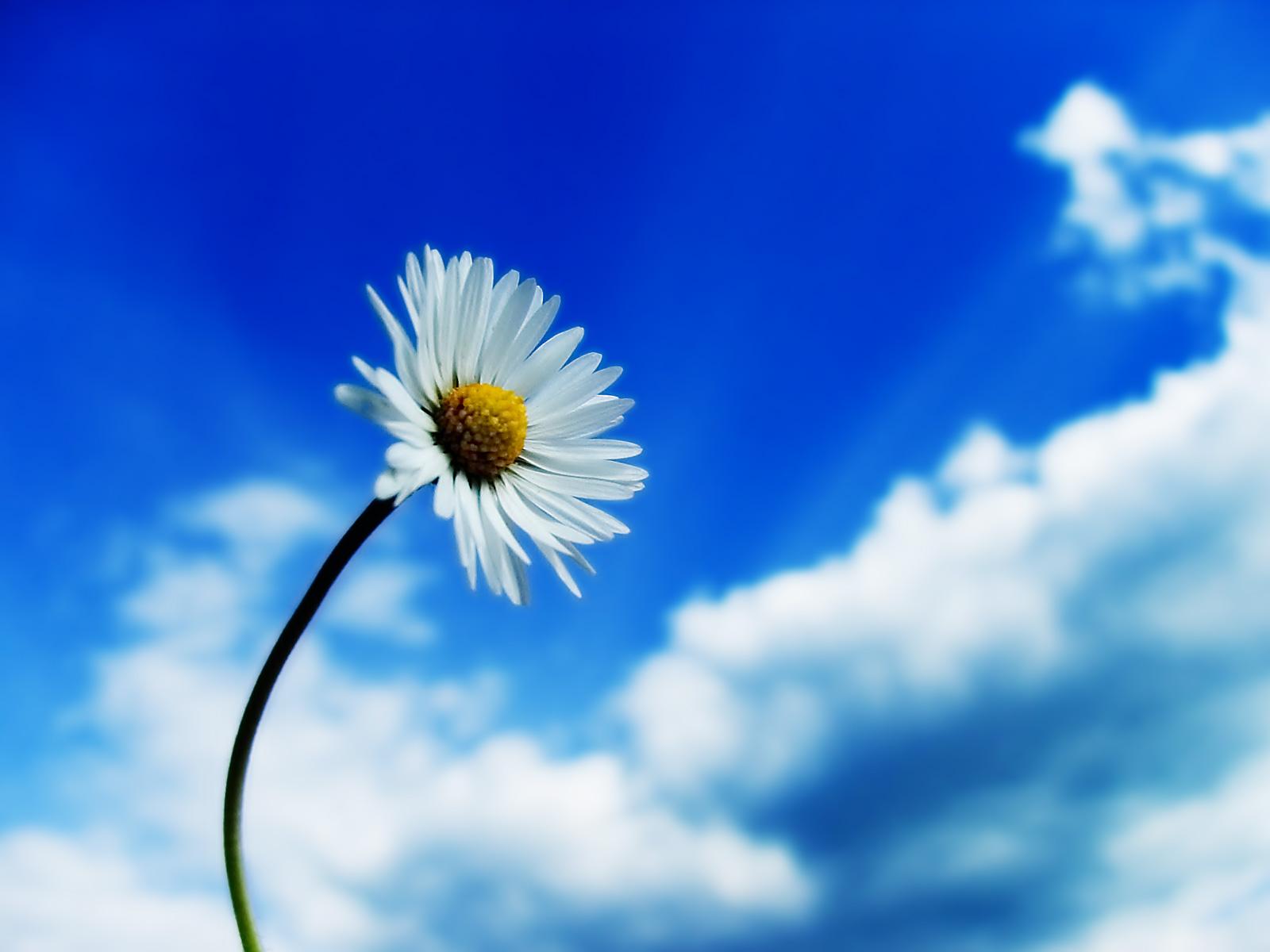 Stáhnout příroda tapety, '7krás-a-osmé-nebe'