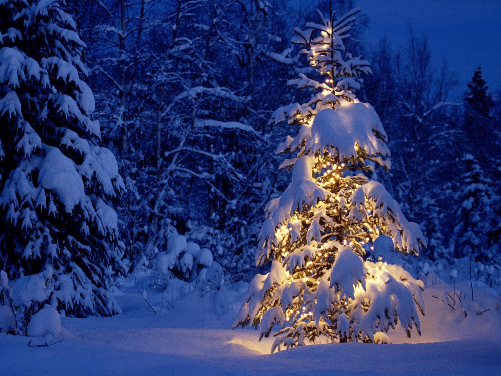 Vánoce-v-lese